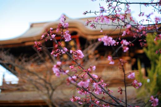 鎌倉時代(建長5年・1253年)に立てられた国宝・国重要文化財のある建長寺境内は、物音ひとつしない静かな佇まいで、これぞ古都鎌倉散策!でしたw。