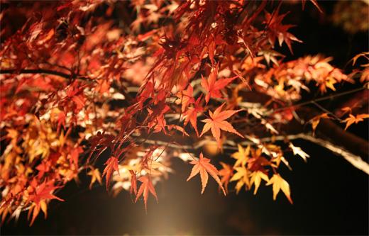 神奈川県大磯町の大磯城山(じょうやま)公園の紅葉ライトアップ見てきました。