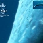 """原寸大のシロナガスクジラを見る事ができ、メッセージの伝え方の参考になる環境団体WDCS""""Life size blue whale – the largest animal in the world""""が面白い!"""