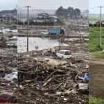 震災被害の傷跡に、緑が映えていく様子をとらえた報道写真。