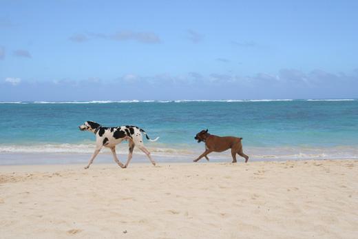 ここは、外せない!「全米で最も美しいビーチ」に選ばれたラニカイビーチとカイルアタウン