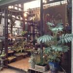 相模原が面白い!!珍しい植物や多肉植物が見つかる『花のお店 輪』に行ってきました。