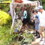 植物、古材、アンティーク、インテリア、雑貨が集まる『Go Green Market 2015』6/7(日)行ってきました。
